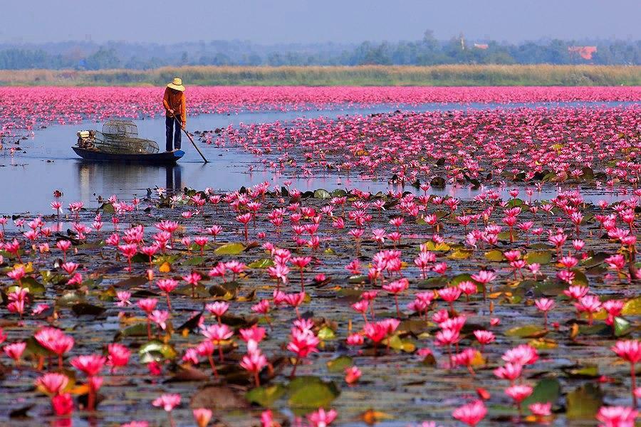 Lótuszt-tó