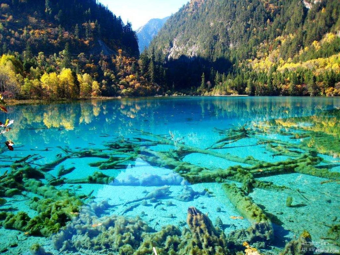 Öt virág-tó