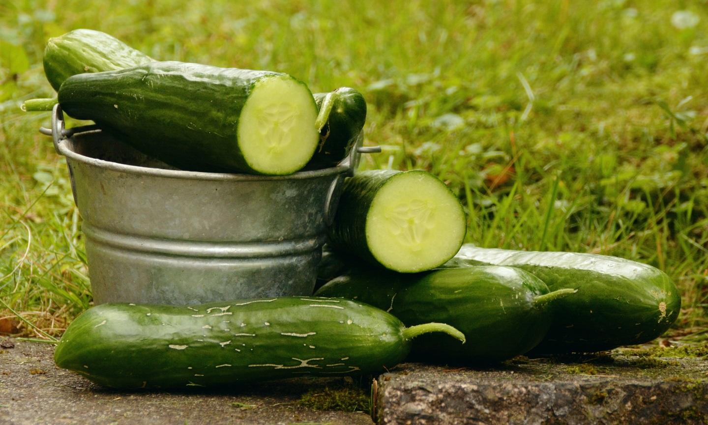 12 dolog, amit tudni érdemes az uborkáról