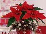 A karácsonyi dekoráció veszélyei a kisgyerekekre