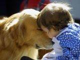 Kutyatámadások – Miért támad a kutya, mit tehetünk? Milyen kutyát válasszunk gyerek mellé?