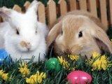 Készítsünk húsvéti nyuszit, csibét!
