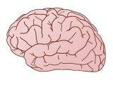 Megdöbbentő dolgot fedeztek fel a tudósok az agyban - Ezért nagyon káros a légszennyezés az emberi szervezetre