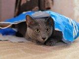 Amilyen ember vagy, úgy viselkedik veled a macskád! - Most tudományosan is bebizonyították