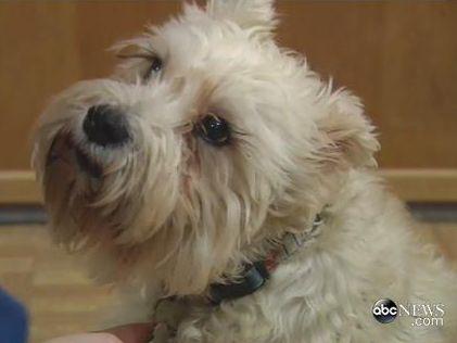 Bármelyik gyógyszernél többet ért - Még a kórházba is beszökött a gazdijához a hűséges kutya