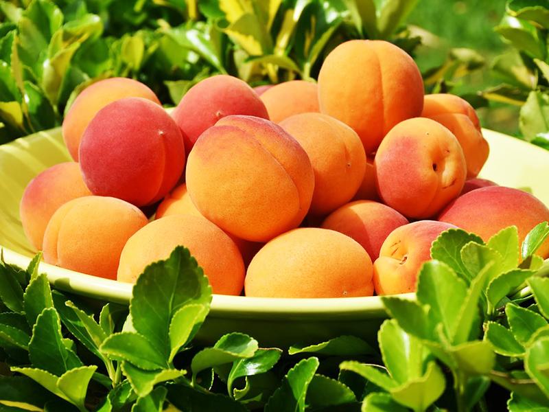 6 dolog, amire jó a sárgabarack - Nem csak finom, de több betegségen és problémán is segít