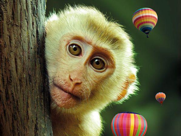 Kaland a dzsungelben - Kiállítás és óriástársasjáték