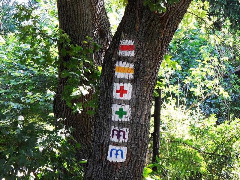 Turistajelzések: 11 fontos turistajelzés, amit taníts meg a gyereknek, hogy könnyebben tájékozódjon az erdőben, kirándulóhelyen