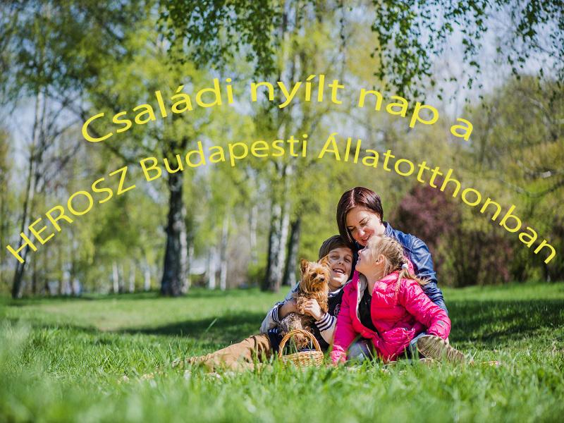 Családi nyílt nap a HEROSZ Állatotthonban: ide vidd el a gyereket, ha szereti az állatokat! Ingyenes programokkal várnak mindenkit