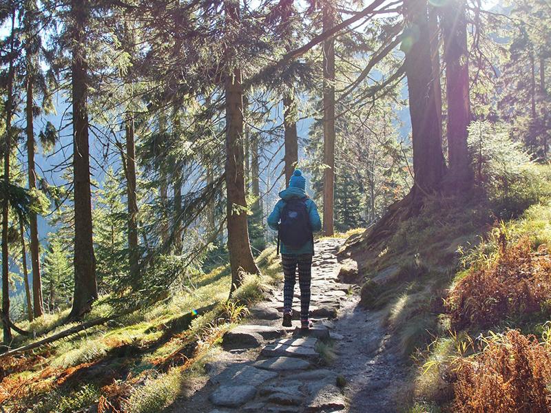 Erdei kirándulóknak, túrázóknak: 6 fontos szabály, amit tartsatok be a sertéspestis miatt - Nébih figyelmeztetés