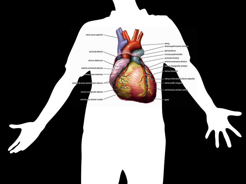 Pulmonális artériás hipertónia: Ezért vezethet halálhoz a kisvérköri magas vérnyomás! - Mik a tünetei? Hogyan mutatható ki?