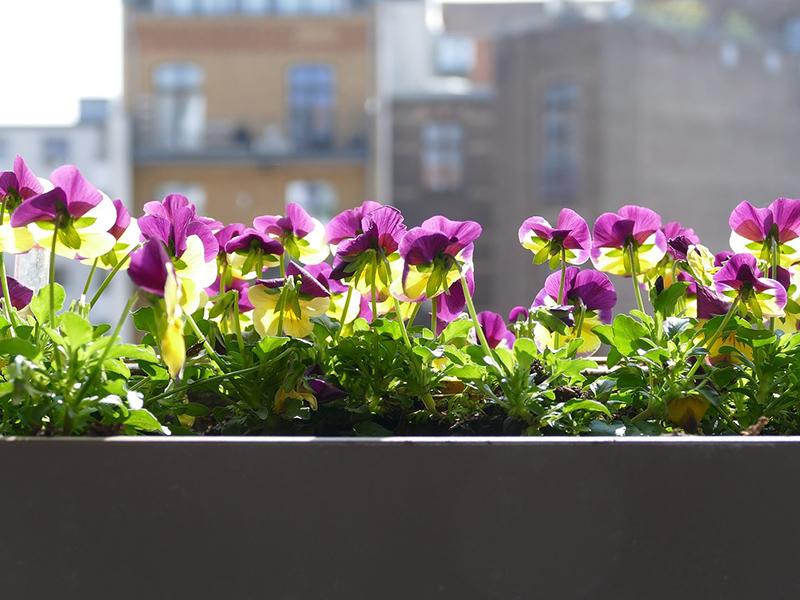 Virágos balkonok, virágos kertek pályázat 2020: Most te is megmutathatod, milyen gyönyörű virágokat nevelsz!