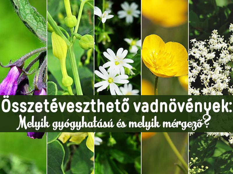 Hasznos és káros vadon termő növények – ne tévesszük őket össze!, Vásároljon mérgező