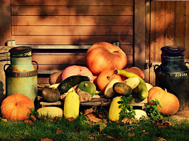 Sütőtök és halloween tök: Vigyázz, mert nem minden tök ehető! - Te tudod, mi a különbség a tökfajták között?