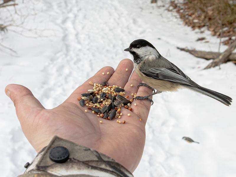 Madáretetés kisokos: Mivel etetheted az énekesmadarakat? Mi a helyzet a vízi madarakkal?