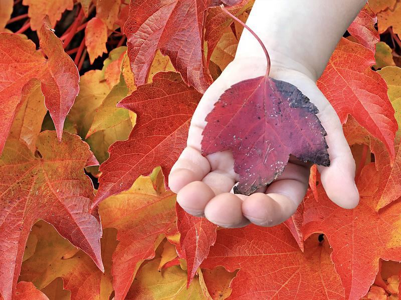 Kreatív őszi játékok - Levélnyomda